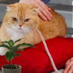 ティティが優秀な芸能猫すぎる?警視庁いきもの係・ナオミに癒される人続出!